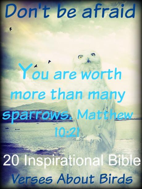 20 Inspirational Bible Verses About Birds