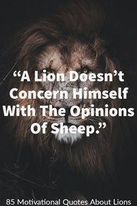 """A Lion does not lose sleep over the opinions of a sheep."""